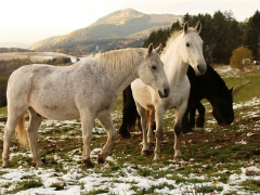 Katarína Cviková - Kde sa voda sypala, piesok sa lial a kone sa preháňali divokým Slovenskom