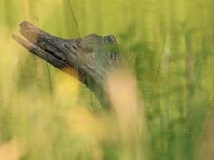Katarína Cviková - O krokodílovi v zámockej záhrade