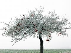 Pavol Remiaš - Maruškina jabloň